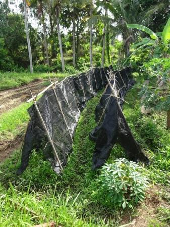 basil shelters