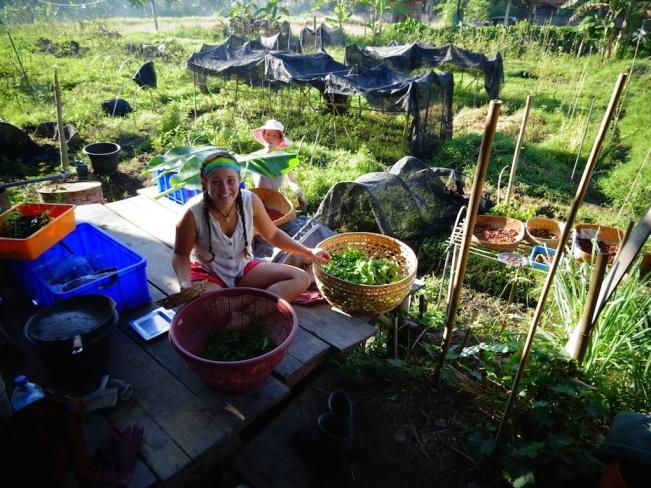 preparing basil for Black Beach in Ubud